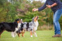 Sporttápok a mozgékony kutyusoknak!