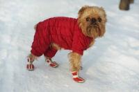 Kutyacipők: Védje kedvence mancsait a sózott utaktól