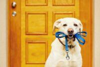 Milyen kutya kiegészítőkre van szüksége egy gondos gazdinak?