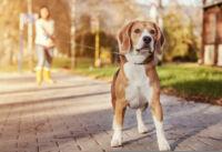 Mi alapján válasszuk ki az optimális kutya nyakörvet?
