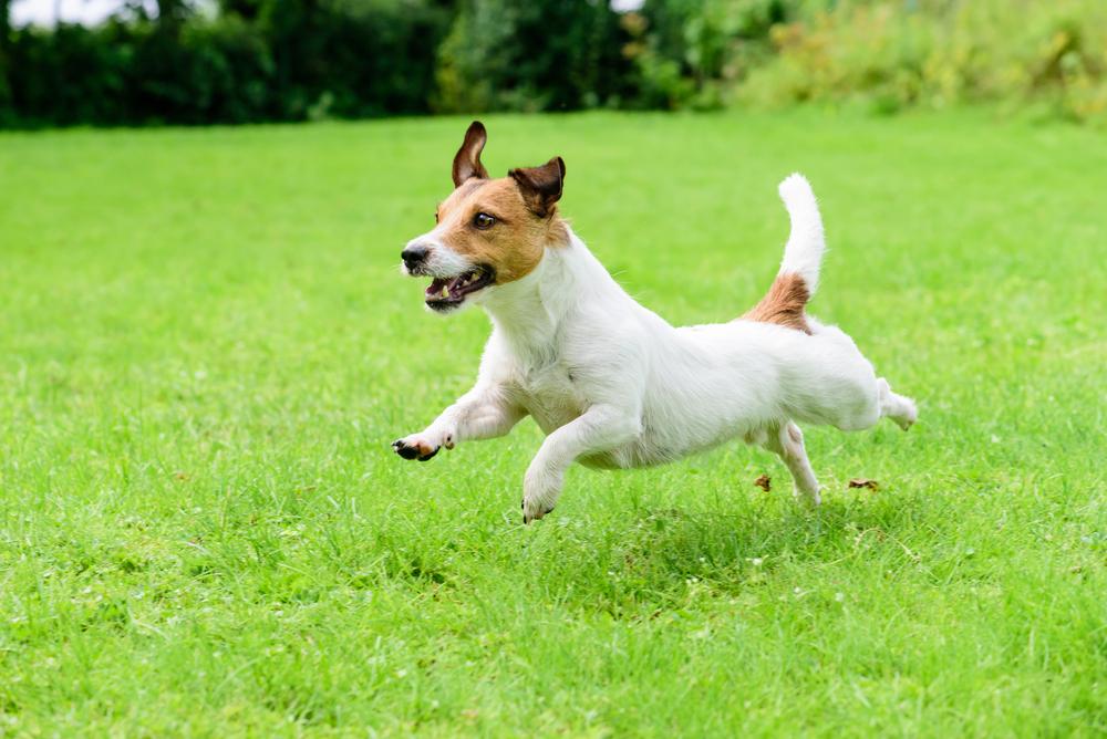 Brit kutyatáppal az egészséges kedvencekért!