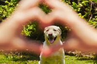 Miért van szükségük a kutyáknak gyógyhatású készítményekre?